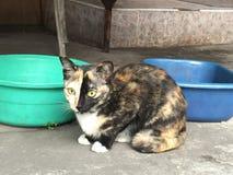 Η σιαμέζα γάτα κάθεται στο κρεβάτι και να φανεί έξω παράθυρο, άσπρη γάτα με τα μπλε μάτια που εξετάζει τα πουλιά Στοκ Φωτογραφίες
