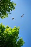 Η σιταποθήκη καταπίνει πέρα από το υπόβαθρο μπλε ουρανού Στοκ φωτογραφίες με δικαίωμα ελεύθερης χρήσης
