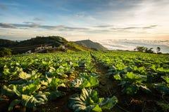 Η σκηνή της Ταϊλάνδης για το μεγάλο αγρόκτημα λάχανων στο βουνό, pH Στοκ φωτογραφία με δικαίωμα ελεύθερης χρήσης