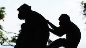 Η σκιά ενός ζευγαριού του πιθήκου Στοκ φωτογραφία με δικαίωμα ελεύθερης χρήσης