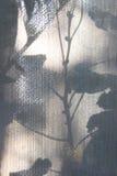 Η σκιά των λουλουδιών στην κουρτίνα Στοκ εικόνα με δικαίωμα ελεύθερης χρήσης