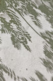 Η σκιά των φύλλων σε έναν άσπρο τοίχο Στοκ Εικόνα
