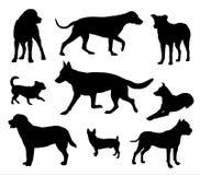 Η σκιαγραφία σκυλιών, σκυλιά σε διαφορετικό θέτει διανυσματική απεικόνιση