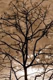 Η σκιαγραφία του δέντρου διακλαδίζεται σέπια Στοκ Φωτογραφίες