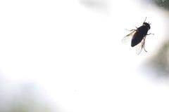 Η σκιαγραφία του εντόμου στο βρώμικο γυαλί παραθύρων Στοκ Εικόνα