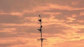 Η σκιαγραφία του πουλιού στον τηλεοπτικό πύργο και το χρυσό φως του ηλιοβασιλέματος απεικόνισαν από τα σύννεφα φιλμ μικρού μήκους