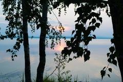 Η σκιαγραφία των δέντρων και των φύλλων στο υπόβαθρο αυξήθηκε ηλιοβασίλεμα σε μια λίμνη Uveldy Στοκ Φωτογραφίες