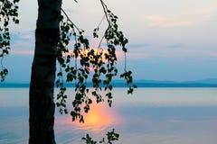 Η σκιαγραφία των δέντρων και των φύλλων στο υπόβαθρο αυξήθηκε ηλιοβασίλεμα σε μια λίμνη Uveldy Στοκ φωτογραφία με δικαίωμα ελεύθερης χρήσης