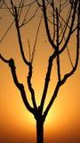 Η σκιαγραφία tree's Στοκ φωτογραφία με δικαίωμα ελεύθερης χρήσης