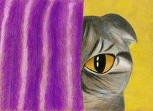 Η σκωτσέζικη γάτα πτυχών κοιτάζει έξω από πίσω από τις κουρτίνες Στοκ εικόνα με δικαίωμα ελεύθερης χρήσης