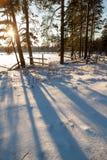 Η σπασμένη περίφραξη στο χείλος του χειμερινού δάσους. Στοκ Εικόνες