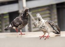 Η στάση πουλιών στοκ φωτογραφία με δικαίωμα ελεύθερης χρήσης