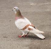 Η στάση πουλιών στοκ εικόνα με δικαίωμα ελεύθερης χρήσης