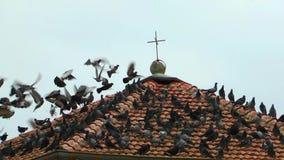 Η στέγη της εκκλησίας και των περιστεριών απόθεμα βίντεο