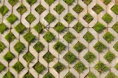 η συγκεκριμένη χλόη πράσινη Στοκ φωτογραφία με δικαίωμα ελεύθερης χρήσης