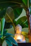 Η συνεδρίαση Βούδας περιέβαλε από τα δέντρα μπανανών Στοκ Εικόνες
