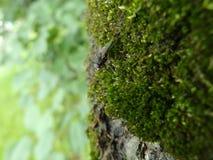 Η συνεδρίαση μυγών στο δέντρο στοκ εικόνες με δικαίωμα ελεύθερης χρήσης