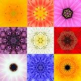 Η συλλογή έθεσε εννέα το λουλούδι Mandalas διάφορο καλειδοσκόπιο χρωμάτων Στοκ Εικόνες