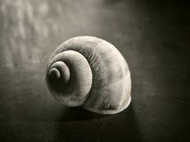 η συλλογή έρχεται φορά ξέρει το σαλιγκάρι τ κοχυλιών μου όπου Στοκ Εικόνες