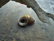 η συλλογή έρχεται φορά ξέρει το σαλιγκάρι τ κοχυλιών μου όπου Στοκ φωτογραφίες με δικαίωμα ελεύθερης χρήσης