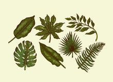 η συλλογή αφήνει τροπικό&sig Χαραγμένα φύλλα ζουγκλών Φύλλα φοινικών ελεύθερη απεικόνιση δικαιώματος