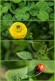 η συλλογή εμβλημάτων ρίχνει πράσινο βγάζει φύλλα τη βροχή φύσης Στοκ Φωτογραφία