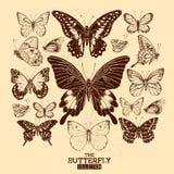 Η συλλογή πεταλούδων Στοκ φωτογραφίες με δικαίωμα ελεύθερης χρήσης