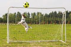 Η σφαίρα ποδοσφαίρου ποδοσφαίρου χτυπά την εγκάρσια ράβδο το αστείο άλμα φυλάκων για να σώσει το στόχο Στοκ εικόνα με δικαίωμα ελεύθερης χρήσης