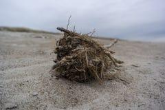 Η σφαίρα χλόης θάλασσας έπλυνε επάνω στην παραλία με τους τόνους braun και ένα αμμώδες υπόβαθρο στοκ φωτογραφία με δικαίωμα ελεύθερης χρήσης