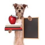 Η σχολικές βιβλία και Apple σκυλιών φέρνοντας Στοκ φωτογραφίες με δικαίωμα ελεύθερης χρήσης