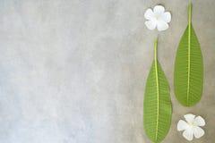 Η σύνθεση έννοιας της επεξεργασίας SPA, κλείνει επάνω των άσπρων λουλουδιών plumeria ή frangipani στο υπόβαθρο πετρών με το διάστ Στοκ φωτογραφία με δικαίωμα ελεύθερης χρήσης