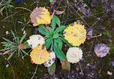 η σύνθεση κεριών φθινοπώρου μήλων ξηρά βγάζει φύλλα vase απόλυσης Στοκ φωτογραφίες με δικαίωμα ελεύθερης χρήσης
