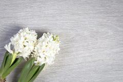 Η σύνθεση λουλουδιών με τους άσπρους υάκινθους η ανασκόπηση ανθίζει το διανυσματικό λευκό άνοιξη απεικόνισης 2 όλα τα αυγά Πάσχας Στοκ Φωτογραφίες