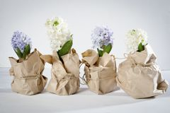 Η σύνθεση λουλουδιών τους ιώδεις και άσπρους υάκινθους που τυλίγονται με στο έγγραφο του Κραφτ η ανασκόπηση ανθίζει το διανυσματι Στοκ Φωτογραφία