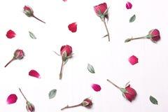 Η σύνθεση, σχέδιο των κόκκινων λουλουδιών Στοκ φωτογραφία με δικαίωμα ελεύθερης χρήσης