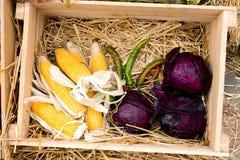 Η σύνθεση του καλαμποκιού, του κόκκινου λάχανου και του πράσινου πιπεριού Στοκ εικόνα με δικαίωμα ελεύθερης χρήσης