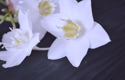 Η σύνθεση των λουλουδιών Άσπρα λουλούδια στοκ φωτογραφίες με δικαίωμα ελεύθερης χρήσης