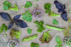 Η σύνθεση των φύλλων, των χλοών και των φυτών Στοκ φωτογραφία με δικαίωμα ελεύθερης χρήσης