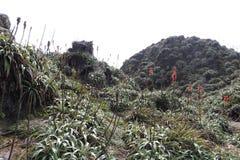Η Σύνοδος Κορυφής του ηφαιστείου Souffriere στη Γουαδελούπη στοκ εικόνες με δικαίωμα ελεύθερης χρήσης