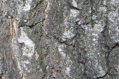 Η σύσταση ενός κορμού δέντρων Στοκ Εικόνα
