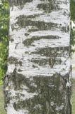 Η σύσταση ενός κορμού δέντρων Στοκ Φωτογραφία