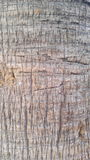 Η σύσταση και η λεπτομέρεια του φοίνικα Στοκ εικόνα με δικαίωμα ελεύθερης χρήσης