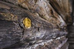 Η σύσταση του ξύλινου τοίχου Στοκ εικόνες με δικαίωμα ελεύθερης χρήσης