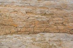 Η σύσταση του φλοιού δέντρων Στοκ φωτογραφία με δικαίωμα ελεύθερης χρήσης