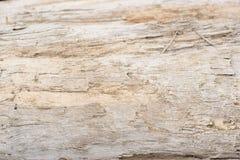 Η σύσταση του φλοιού δέντρων Στοκ Φωτογραφία