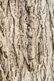 Η σύσταση του φλοιού, παλαιός φλοιός δέντρων που χρωματίζεται με τον ασβέστη, αφηρημένο υπόβαθρο κινηματογραφήσεων σε πρώτο πλάνο Στοκ Φωτογραφίες