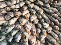 Η σύσταση των αποξηραμένων παστών ψαριών θάλασσας με ένα επικεφαλής, ανοικτό στόμα και τις κλίμακες Αλατισμένο πρόχειρο φαγητό ψα στοκ εικόνες με δικαίωμα ελεύθερης χρήσης