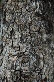 Η σύσταση φλοιών νυχιών παρουσιάζει την μαύρος-καφετιά τραχιά σύσταση και βολβό του ματιού από gnarly το δέντρο Στοκ εικόνα με δικαίωμα ελεύθερης χρήσης