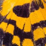 Η σύσταση φτερών πεταλούδων, κλείνει επάνω της λεπτομέρειας του φτερού πεταλούδων για Στοκ φωτογραφία με δικαίωμα ελεύθερης χρήσης