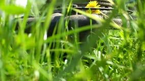 Η τέμνουσα χλόη κηπουρών από το θεριστή χορτοταπήτων απόθεμα βίντεο